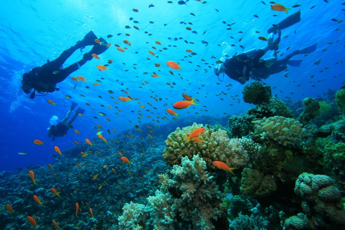 Scuba Diving and Snorkeling in Colombia